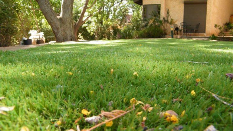 הקמת מדשאה בגינה